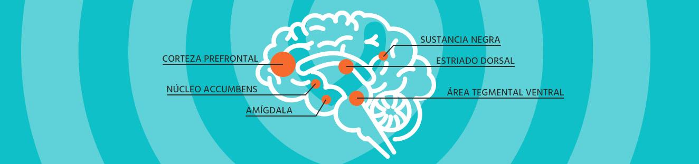 Infografía cortex cerebral